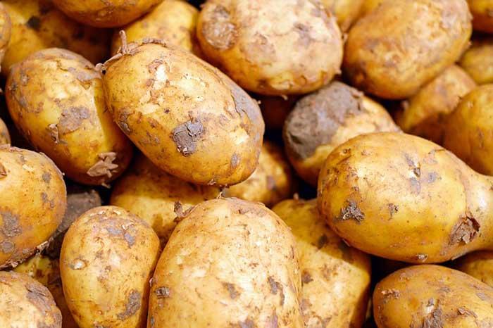 Sau nâng mũi ăn khoai tây được không
